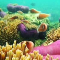 ทริปดำน้ำเกาะทะลุ-มัลดีฟเมืองไทย